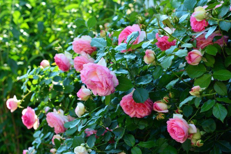 Haag bloemen